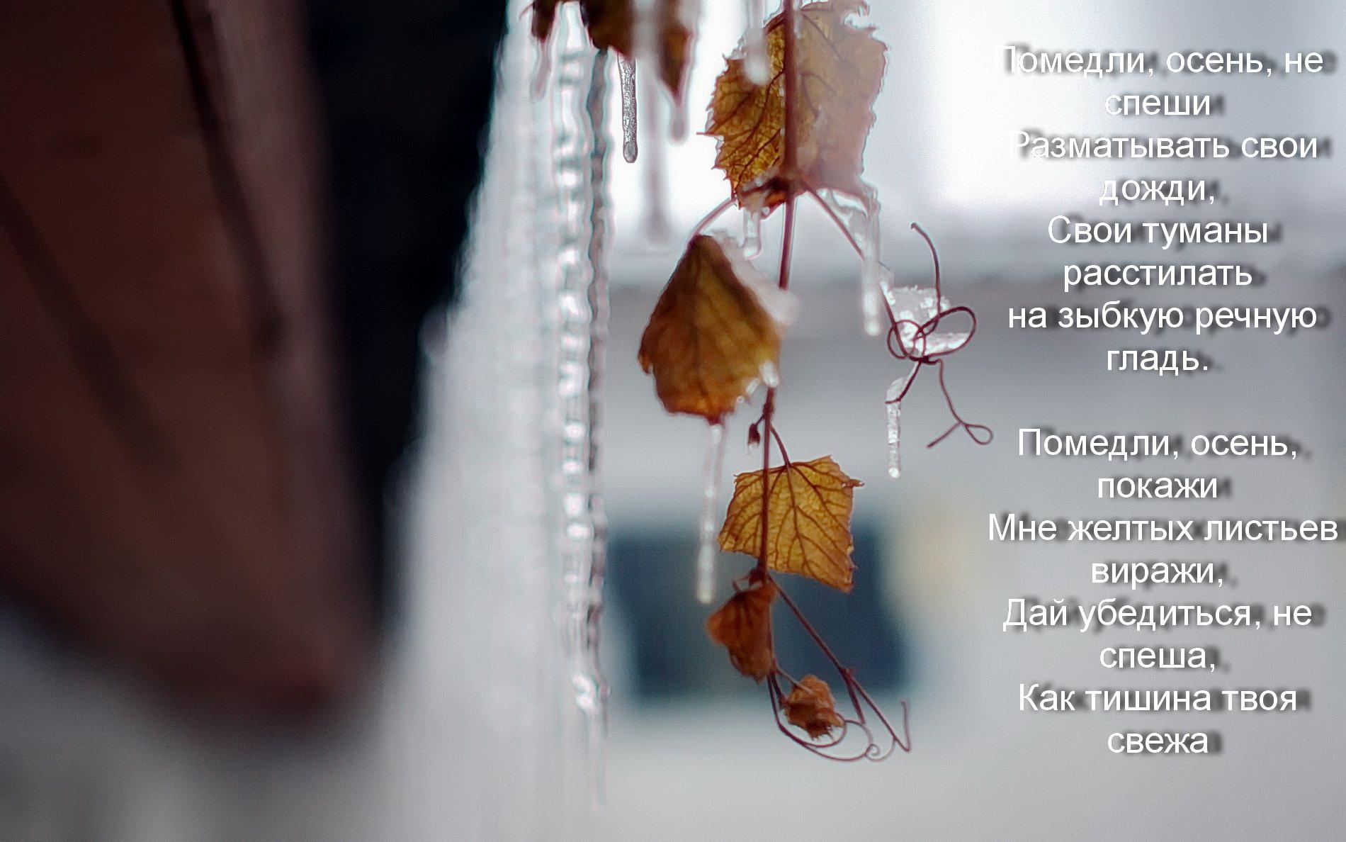 статусы в картинках про осень с дождем баснословные